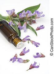 Sage plant and essential oil used for seasonig food,...