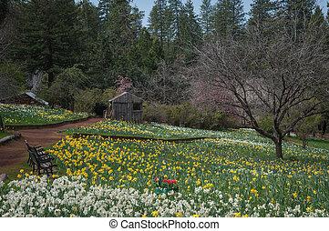 Cabin at Daffodil Hill Tourist Attraction California in...