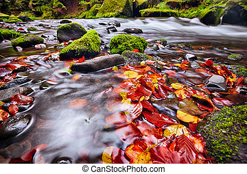river Kamenice in autumn, Bohemian Switzerland - river...