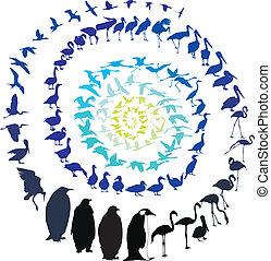 Birds in a spiral