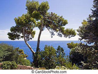 Beautiful park ashore Mediterranea - Beautiful park ashore...