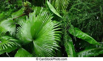 Tropical rain in forest - Video 1920x1080p - Tropical rain...