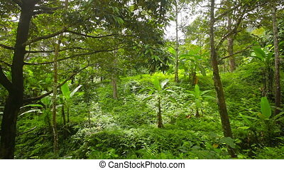 Not a dense tropical forest - Video 1080p - Not a dense...