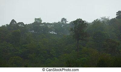 Heavy rain over the jungle
