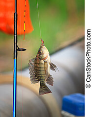 nile fish hanging on hook