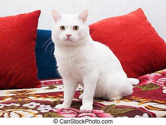 White cat sitting on a colorful bedspread, surrounded by red...