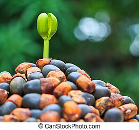 step of growing  tree seed sprout tree