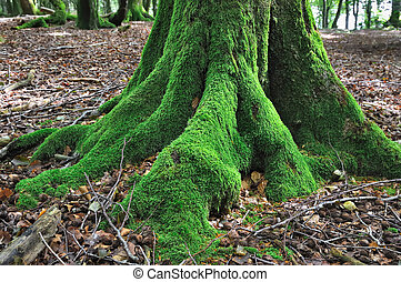 tree covered with moss - roots of a tree covered with a very...