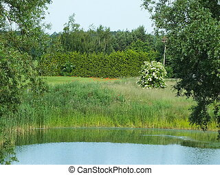 small natural pond in Mecklenburg-Western Pomerania, Germany