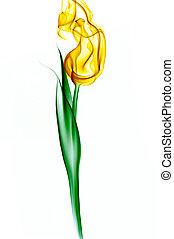 smoke tulip