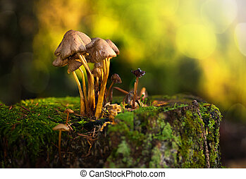A group of mushrooms on a stub in sunlight during autumn
