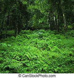 自然, トロピカル, 背景, 緑, 森林, 野生, 風景, ジャングル