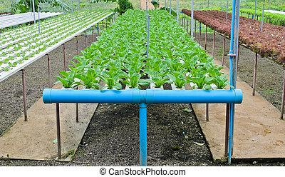 hydroponic, Légumes, ferme
