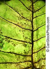 Leaf surface - Closeup of Leaf surface details