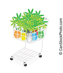 Lovely Tree Pot in A Shopping Cart