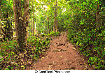 Walk path in the forest