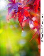 art autumn beautiful background of red leaves
