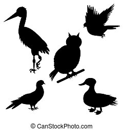 Monochrome silhouettes of different species of birds....