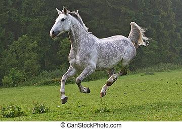 Pferd, glücklich