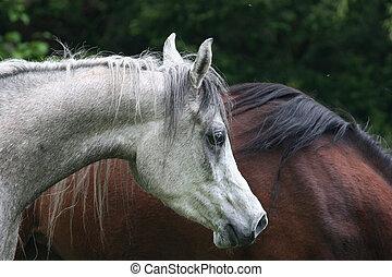 Mare - Horse
