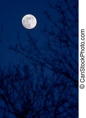 Full moon piercing through the blurred branches of a tree.