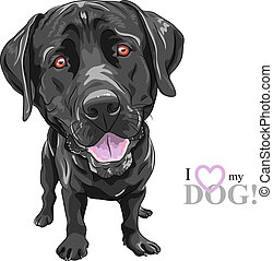 Vector, gekke, spotprent, black, dog, ras, labrador,...