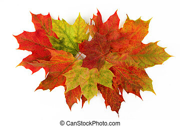 autumn leaves - Autumn leaves isolated with white background...
