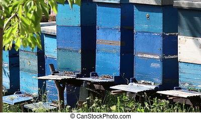 Bee, hive
