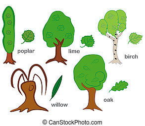 Deciduous Trees - Set of green trees isolated on white...