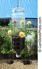 plastic bottle and Sprout - Pot grown trees for Ade in the...
