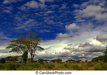 Africa - A scene of the African bush in Kenya with a blue...