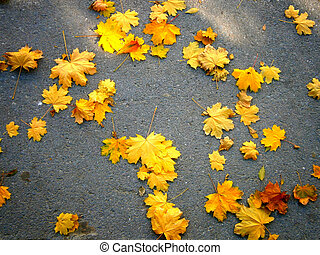 Yellow leaves on the gray asphalt