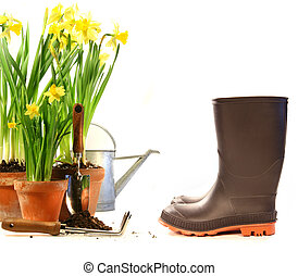 Pots of daffodils with rubber boots on white