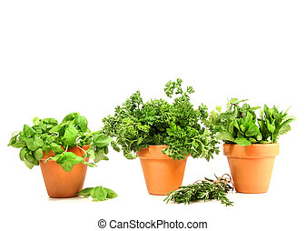 Clay pots with herbs on white