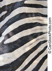 Zebra - Natural Art
