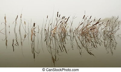 lake in mist - stems of reeds reflected in water