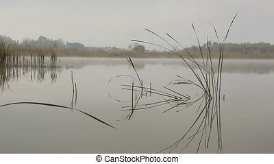 lake landscape in mist - stems of reeds reflected in water