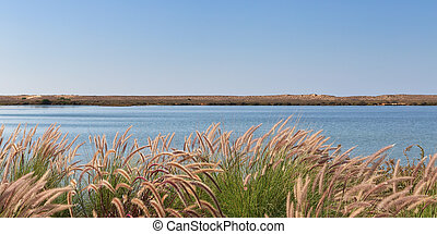 The concept of landscape grass on a background of lake. Close-up.