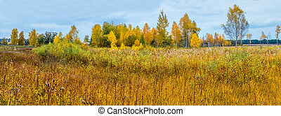 Autumn forest panorama