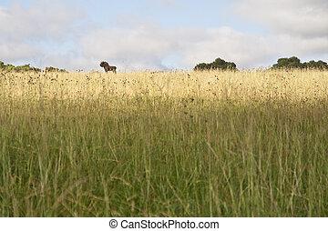 Black Wildebeest - Black wildebeest standing on a open...
