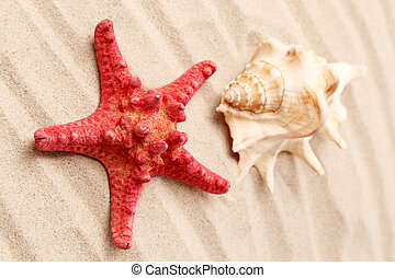 Starfish and seashell on sand Located on sandy background