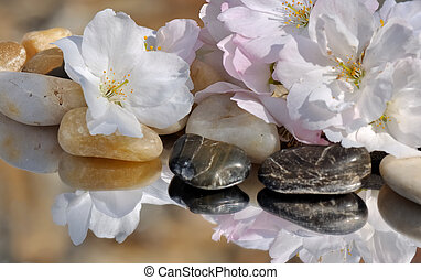 cherry blossom on pebbles - delicate cherry blossom on small...