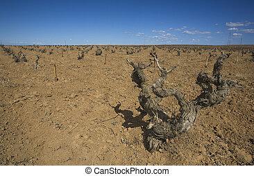 Vineyards - Cropland of Vineyards in winter Badajoz, Spain