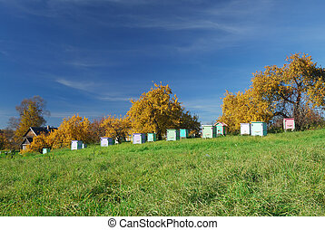 Honey bee hives in autumnal apple garden