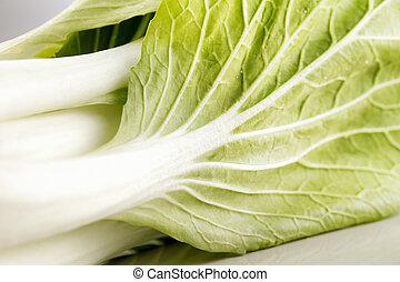A head of paksoy lettuce