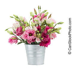 Pink eustoma flowers in  pot  isolated on white background