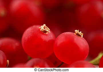 Fresh organic red currants shot in an abstract manner on a...