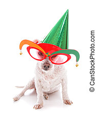 Pet with party hat and court jester glasses - Pet wearing...