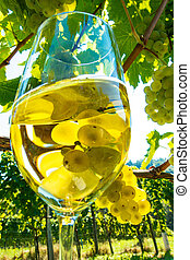 glass of wine in the vineyard - wine glass with wine in the...