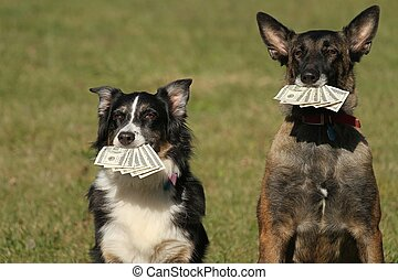 2 Dogs holding money - 2 dogs holding hundred dollar bills
